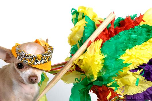 Dog & Pinata Costume